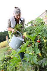 Senior woman watering vegetable garden