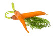 Ripe young carrot