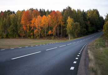 asphalt road in autumn landscape