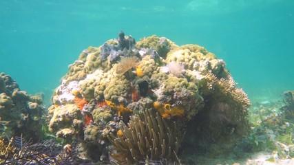 Colorful marine life scene in Caribbean sea