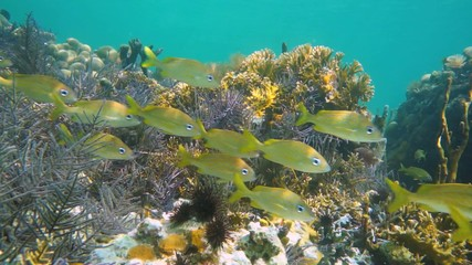 Thriving coral reef with school of fish