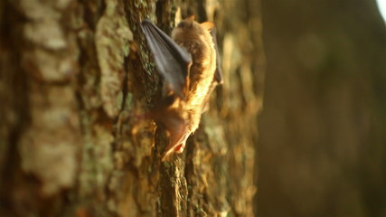 bat crawling on a tree