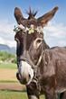 Portrait d'un âne avec couronne de fleurs