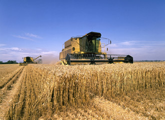 Two combine harvesters at work in corn field