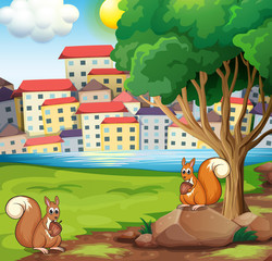 Two squirrels at the riverbank across the village
