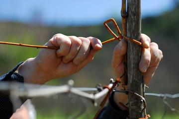 Mani di contadino