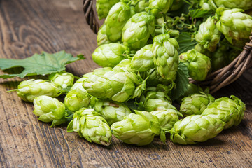 green hop cones on a wooden table