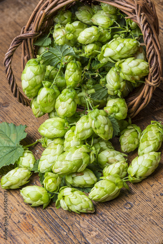 green hop cones in a basket on a table