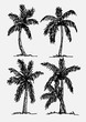 palm tree Tropical palm trees, black silhouettes background