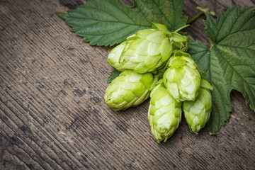 fresh green hop cones on a wooden table