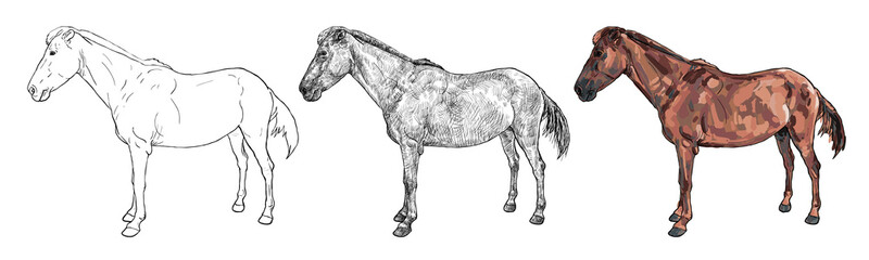 Drawing of female horse