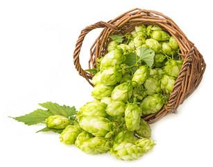 hop cones in a basket