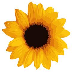 Sonnenblume Vektor