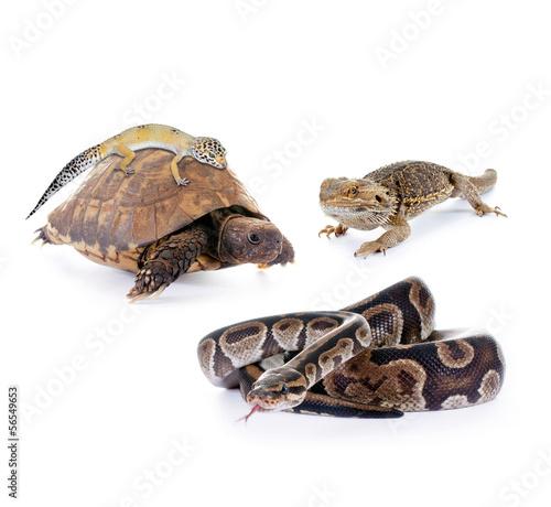 Tuinposter Schildpad Reptilien