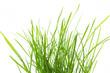 Leinwanddruck Bild - Grasbüschel auf weißem Hintergrund