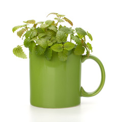 Herbal peppermint tea cup