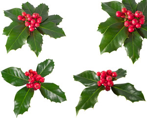 Holly Berry.