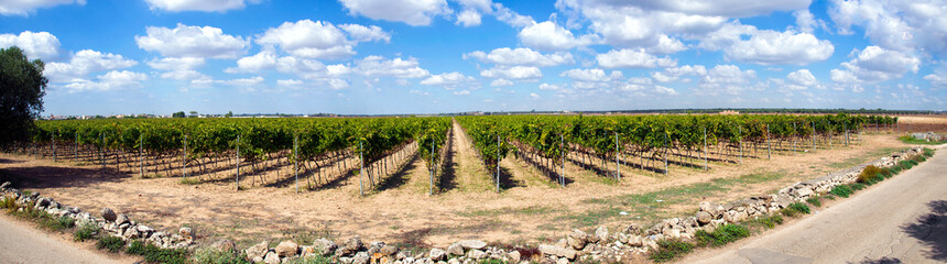 Panorama vitigno