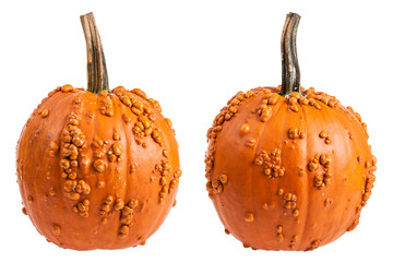 Two views of a warty pumpkin isolated on white