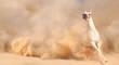 Leinwandbild Motiv horse in dust