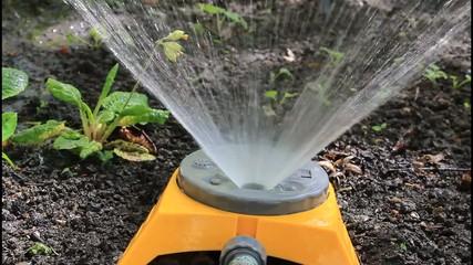 watering gardens