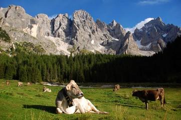 Pale di San Martino dalla Val Venegia