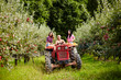 Young farmers on a tractor in the apple orchard