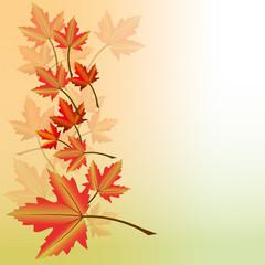 Herbstblätter. Ahorn Laub 8