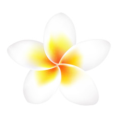 Frangipani Flower Isolated
