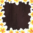 White Frangipani Frame With Wood Background