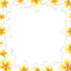 White Frangipani Frame