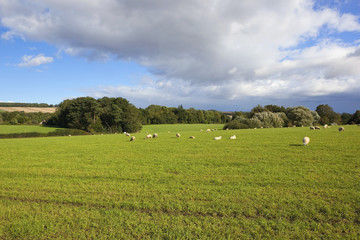 scenic meadow with sheep