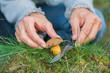 frau schneidet pilze im wald ab