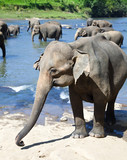 Herd of elephants taking bath in rough river on sunny day