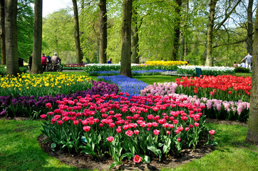 Purple, yellow, blue, pink and white tulips in Keukenhof park in