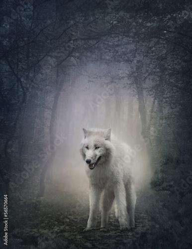 Foto op Plexiglas Wolf White wolf