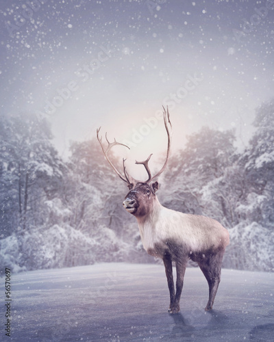 canvas print picture Reindeer