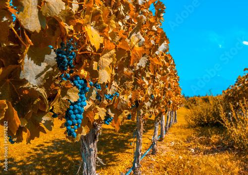 Spoed canvasdoek 2cm dik Wijngaard Vineyards of Mendoza, Argentina