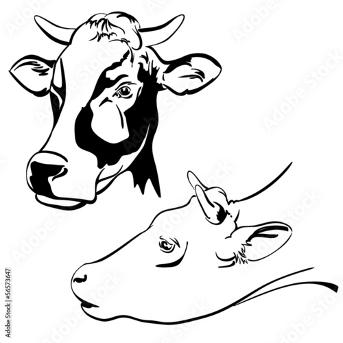 cow set sketch  vector  illustration