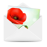 White Envelope With Poppy Flower