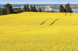 Prince Edward Island Farm Fields