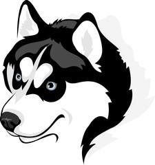 vector image of head of the Siberian Husky dog