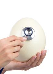 auscultating enormous big ostrich egg