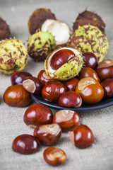 Autumn image of chestnuts