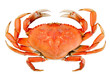 Isolated Whole Dungeness Crab - 56596898