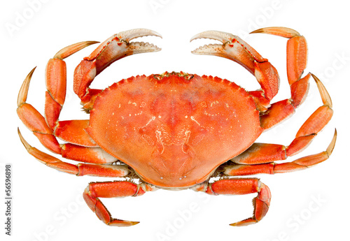 Deurstickers Schaaldieren Isolated Whole Dungeness Crab