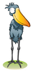 shoebill bird