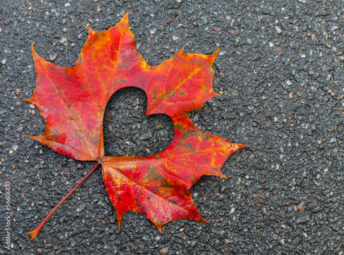 Fall in love metaphor with red maple leaf and heart