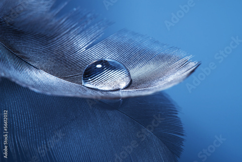 feathers with drop