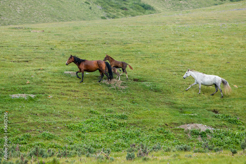 Herd of horses running in the field